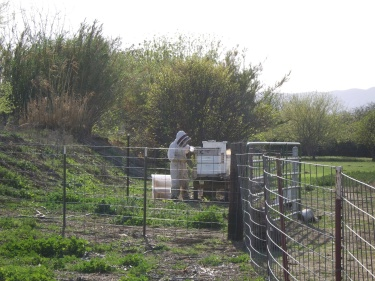 Honey Harvest with Beekeeper